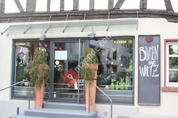 Fleurop Blumen Wunder Bad Homburg Vor Der Hohe