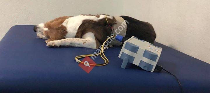 Hundephysiotherapie Mülheim